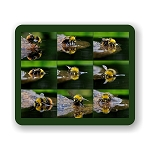 Bather Bumblebee Mouse Pad 9.25