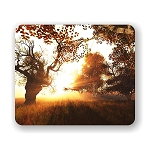 Beautiful Forest Scene Mouse Pad 9.25