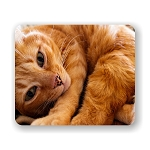 Curled Up Orange Cat Mouse Pad 9.25