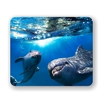 Happy Dolphin Family Mouse Pad 9.25