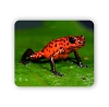 Red And Black Tree Frog  Mouse Pad 9.25