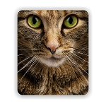 Tiger Cat Staring Mouse Pad 9.25