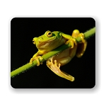 Tree Frog On Reed Mouse Pad 9.25