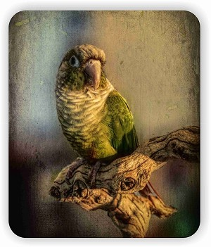 "Green Cheek Conure Mouse Pad 9.25"" X 7.75"""