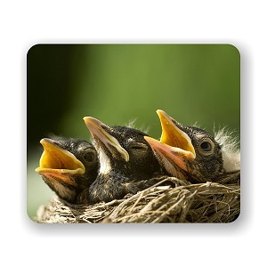 "Baby Robins in Nest Mouse Pad 9.25"" X 7.75"""