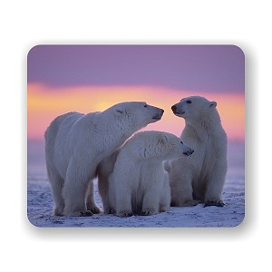 "Polar Bear With Yearling Cubs Mouse Pad 9.25"" X 7.75"""